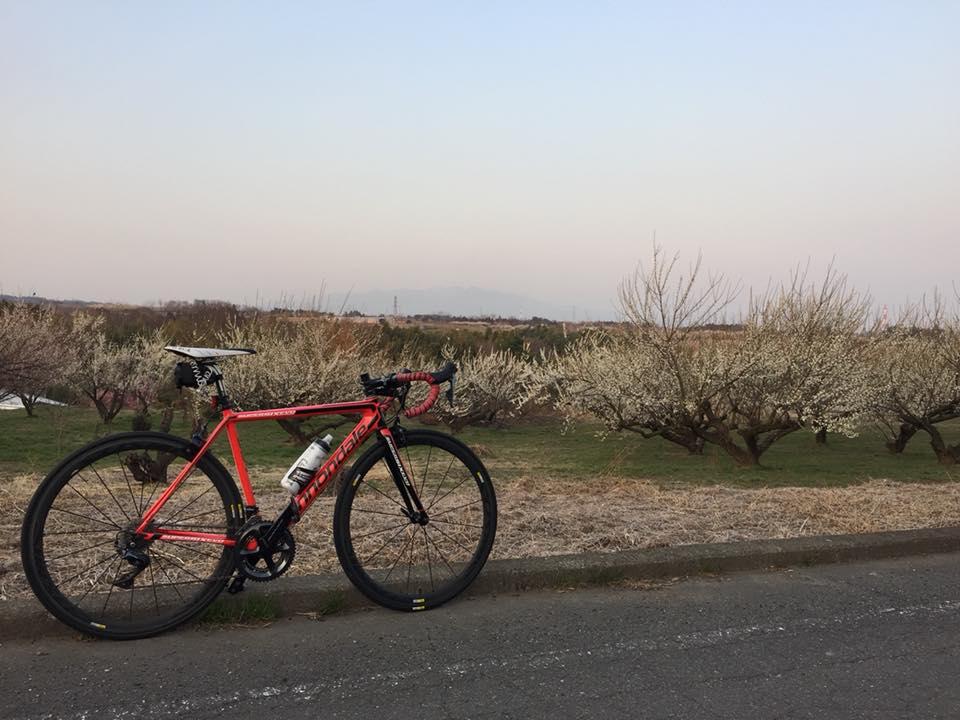 梅の榛名とパワーメーター